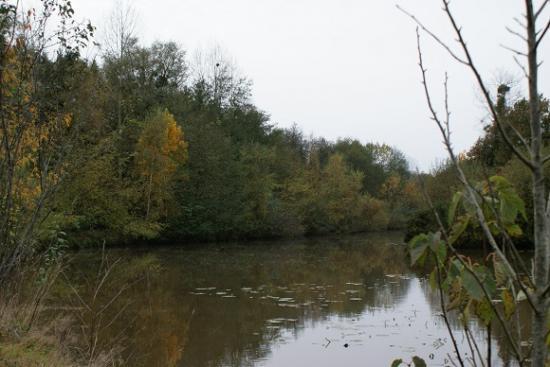 L'étang à l'automne