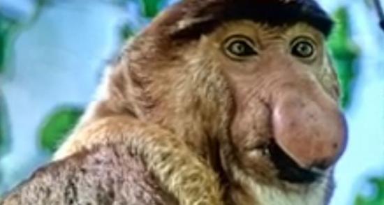 3133989-13-proboscis-monkey.jpg