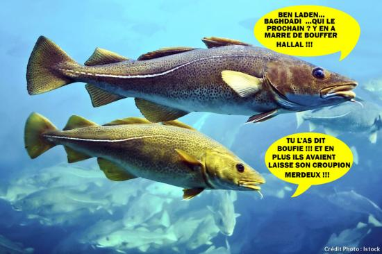 Cabillaud morue poisson istock baghdadi