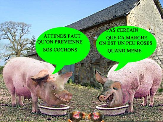 cochons2f.jpg