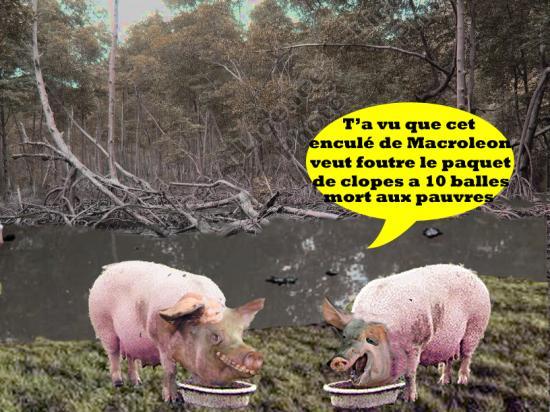 Cochonsmaraisclopes1