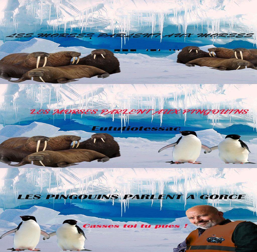 Pingouins parllent gorce
