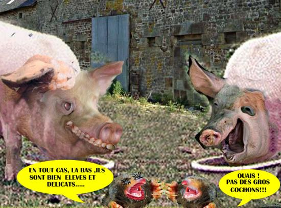 Taupes cochons2