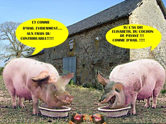 Taupes cochons5
