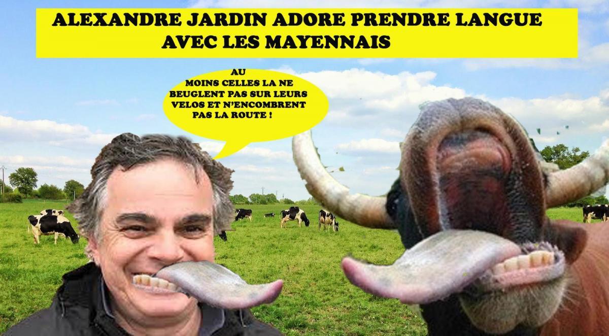 Vaches jardin 6